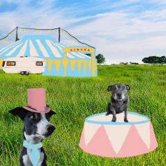 Circus Dogs- Esmee Aarbodem