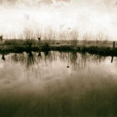 landschap10