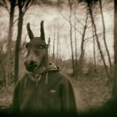 Donkey-In the woods1